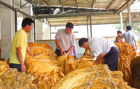 组织技术员下村指导,为烟农搭建销售渠道等方式,把烤烟产业打造成了该