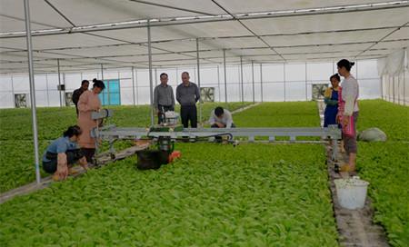 图为乡人大代表参观乡现代烟草农业专业化育苗工场.