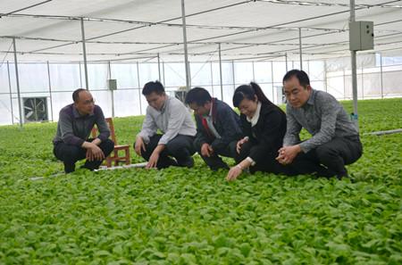 图为代表在乡现代烟草农业专业化育苗工场,探讨烤烟产业未来发展.