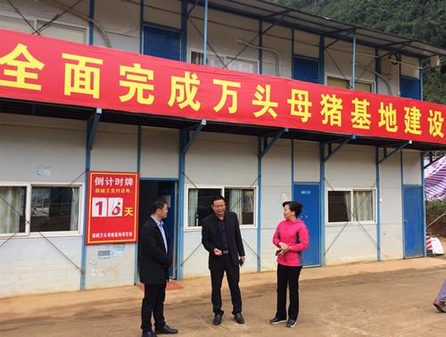 梁俊杰副主任到禄峒镇大金村开展调研工作